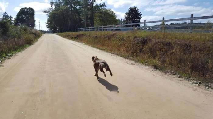 Dog running ahead of JOM.