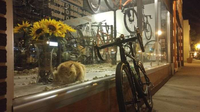 Hi-C - resident kitty at High Gear Cyclery, Emporia, Kansas.